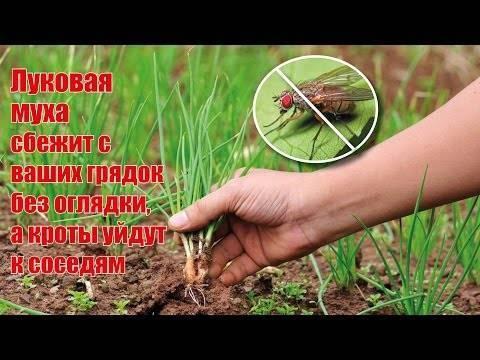 Нашатырный спирт для сада и огорода: удобрение и защита от вредителей.