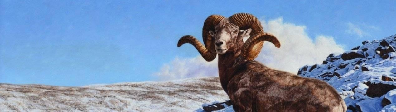 Описание алтайских горных баранов и подробная информация о виде, разведение