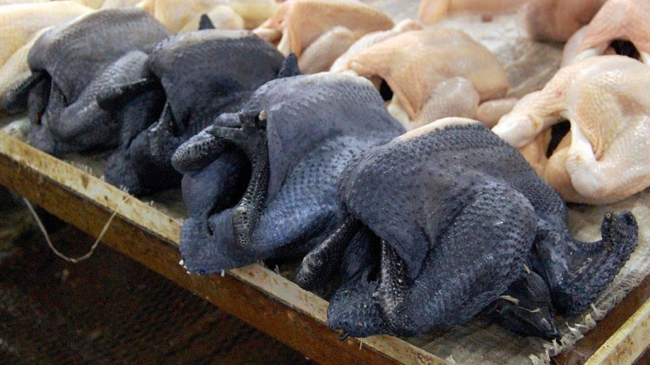 Черные куры аям цемани фото и описание породы