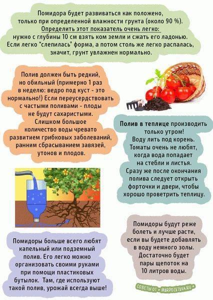 Как поливать рассаду помидоров правильно