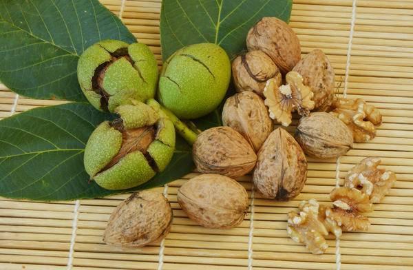 Как правильно из ореха вырастить дерево. выращивание грецкого ореха из плода в домашних условиях. как размножить грецкий орех - несколько способов