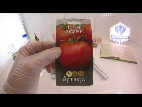 Томат санрайз — голландец на русской земле