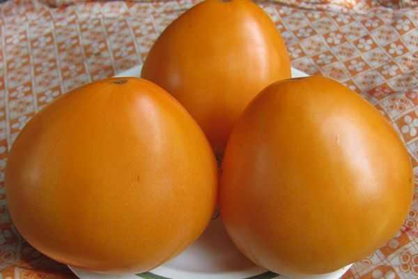 Крупные, оранжевые, что может быть лучше? описание сорта томата «оранжевое чудо»