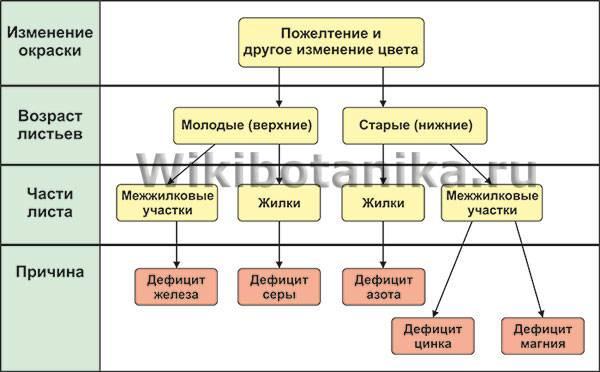 О болезнях огурцов, их лечении ипрофилактике