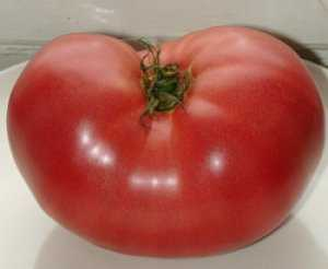 Выращиваем помидоры японский краб