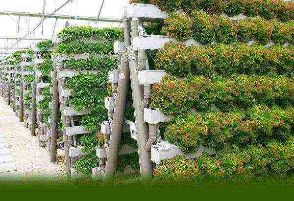 Выращивание зелени на гидропонике в домашних условиях