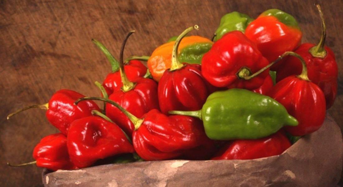 Деликатесный сорт с приятной жгучестью плодов — перец хабанеро: отзывы и описание