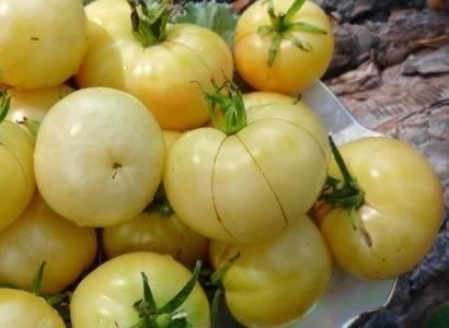 Томат диковинка: характеристика и описание сорта, урожайность с фото