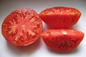 Характеристика и описание томата «гордость сибири»