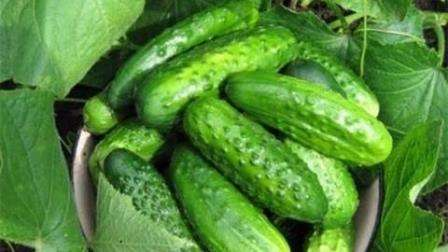 Выращивание огурцов в 5 литровых пластиковых бутылках