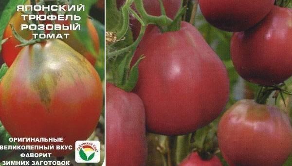 Детерминантный сорт томата «агата»: описание, характеристика, посев на рассаду, подкормка, урожайность, фото, видео и самые распространенные болезни томатов