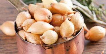 Лук-севок бамбергер: описание сорта, отзывы