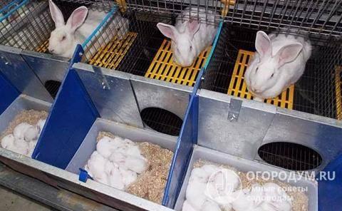 Как построить клетку для кроликов своими руками? пошаговое руководство