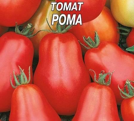 Сорт томата рома