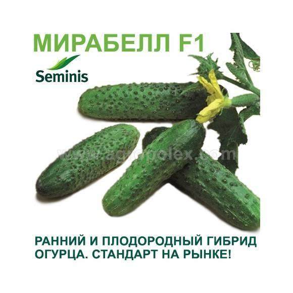 Гибрид огурца «мирабелла f1»: урожайность и устойчивость к болезням