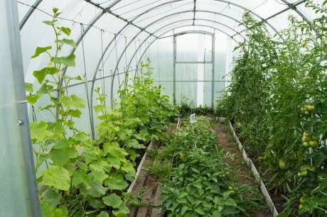 Выращивание баклажанов в теплице: с чем можно сажать? полезное соседство овощей на грядках: схемы и таблицы совместимости
