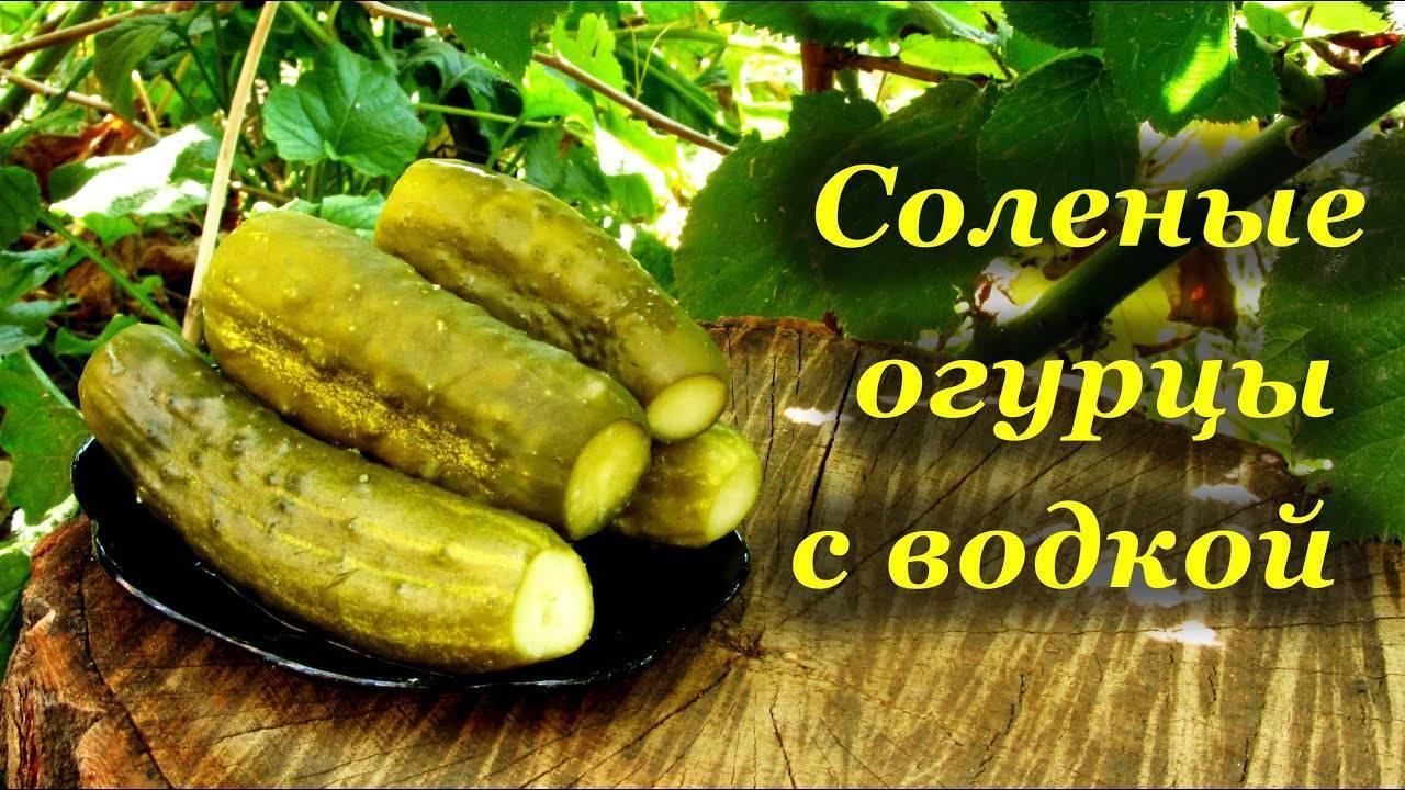 Рецепты консервированных огурцов злодейских с водкой на зиму