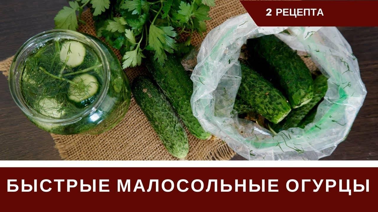Огурцы малосольные хрустящие — рецепты быстрого приготовления