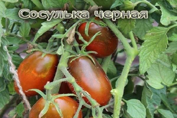 Описание сорта томата Сосулька черная, особенности выращивания