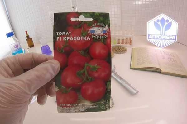 Мал золотник, да дорог — томат «классик f1»: описание сорта, выращивание, рекомендации