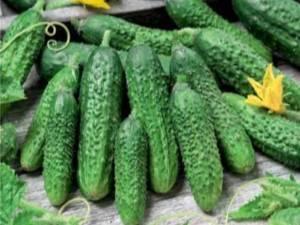 Выращивание огурцов сорта парижский корнишон