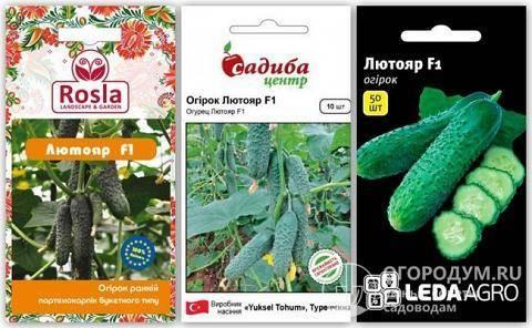 Характеристика и описание гибрида огурцов лютояр f1, выращивание и уход