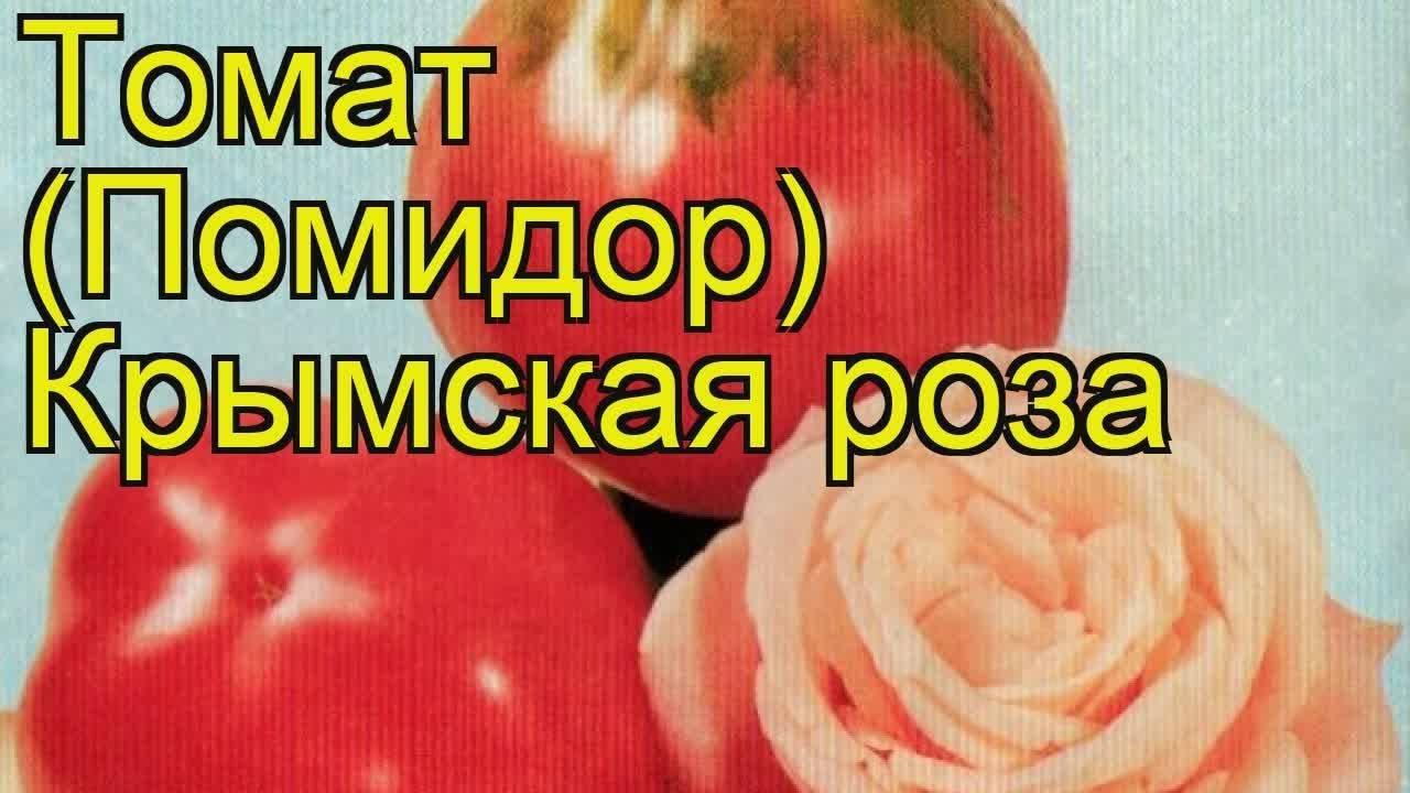 Чёрный крым — урожайный темнокожий томат, совершивший кругосветку
