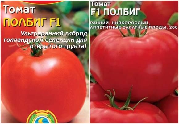 Ранний богатый урожай на радость каждому дачнику — томат «полбиг»