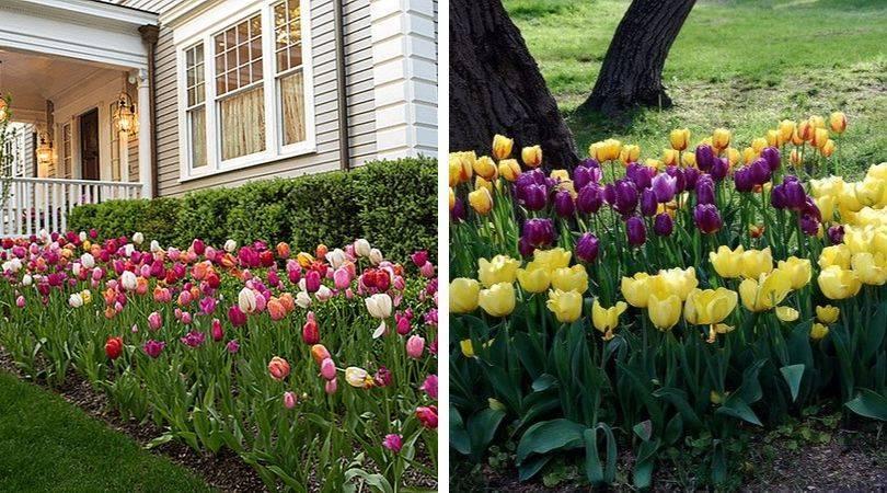 Как красиво посадить луковичные: 10 дизайнерских идей