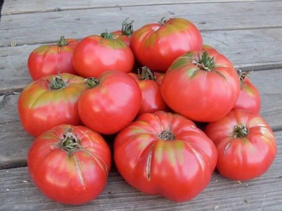 Томат «анастасия»: масса достоинств и простое выращивание