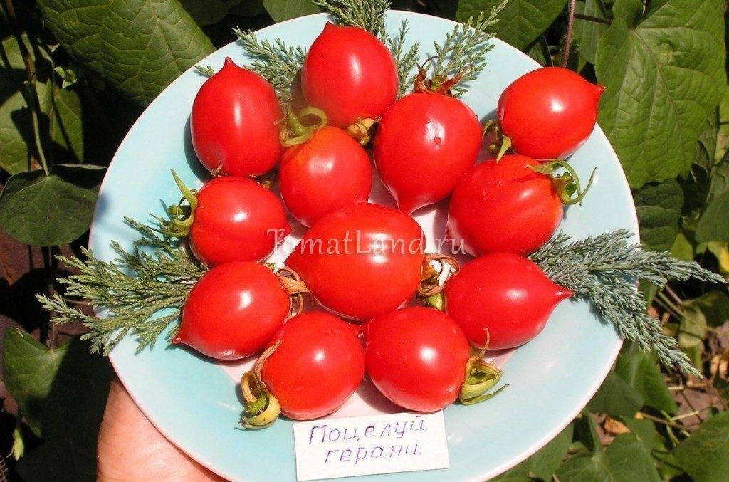Томат каскад: характеристика и описание сорта, его урожайность с фото