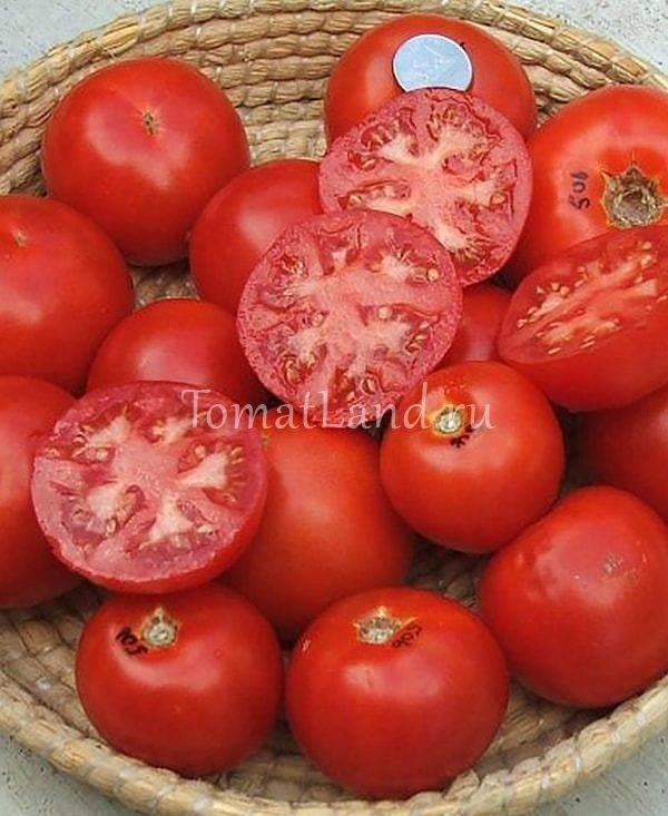 Помидоры москвич: урожайность и описание сорта