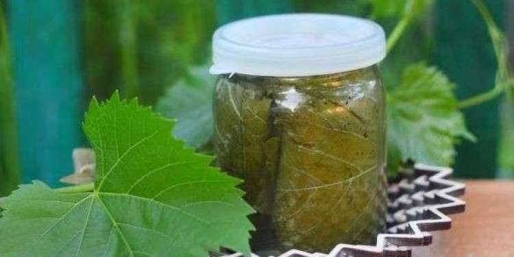 Огурцы в виноградных листьях – пикантная закуска на ваш стол