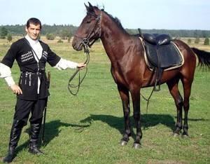 Кабардинская порода лошадей: история, характеристика, описание экстерьера