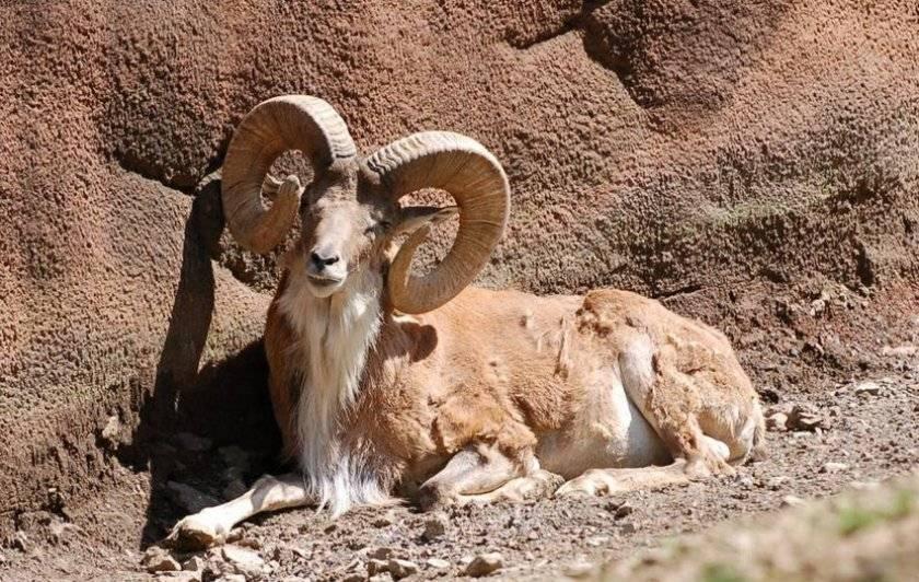 Дикая природа горного алтая алтайский заповедник животные