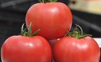Томат кукла f1: характеристика и описание сорта, урожайность с фото и видео