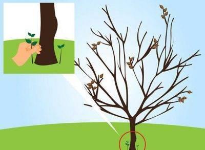 Избавляемся от ненужного дерева: 4 средства, чтобы оно быстро засохло