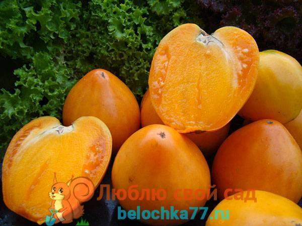 Томат бизон желтый: характеристика и описание сорта, отзывы садоводов с фото