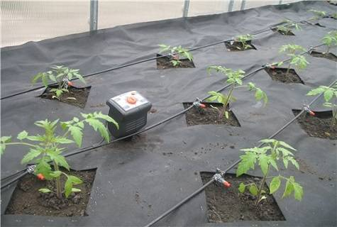 Как часто и правильно поливать помидоры в теплице, виды организации полива томатов