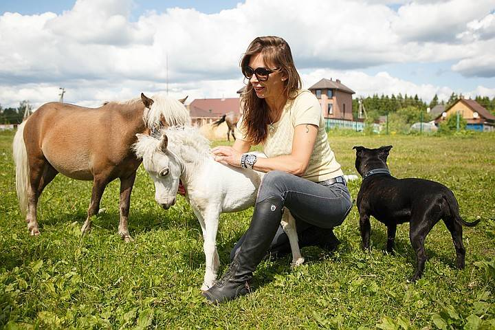 Какая лошадь самая дорогая в мире?