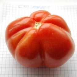 Удивительный томат сорта сто пудов