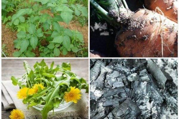 Огородники рекомендуют: чем обработать щавель от вредителей народными средствами?