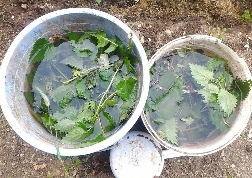Удобрение из крапивы и навоза