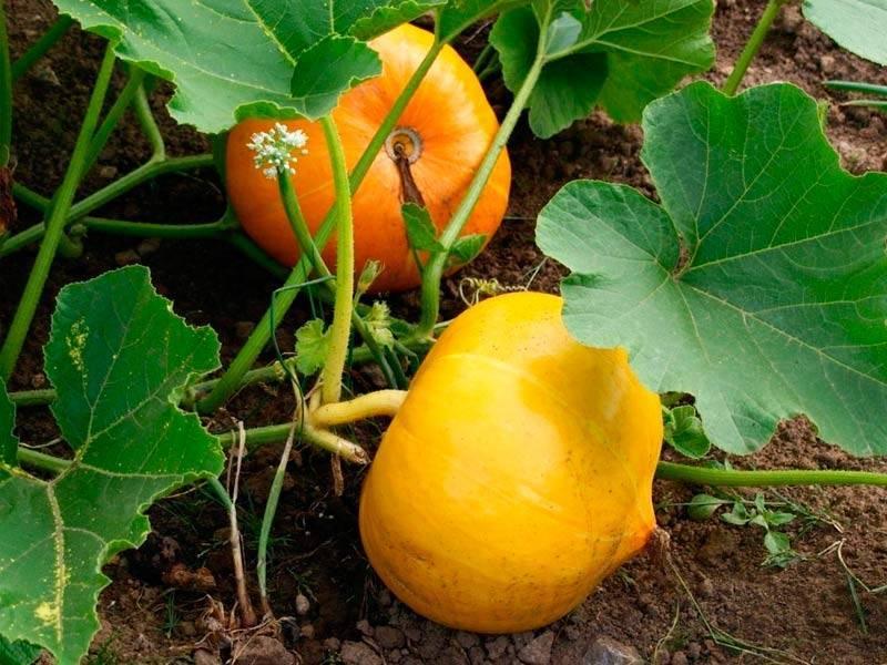 Правила севооборота: что сажать после картофеля на следующий год и под зиму? полезные советы