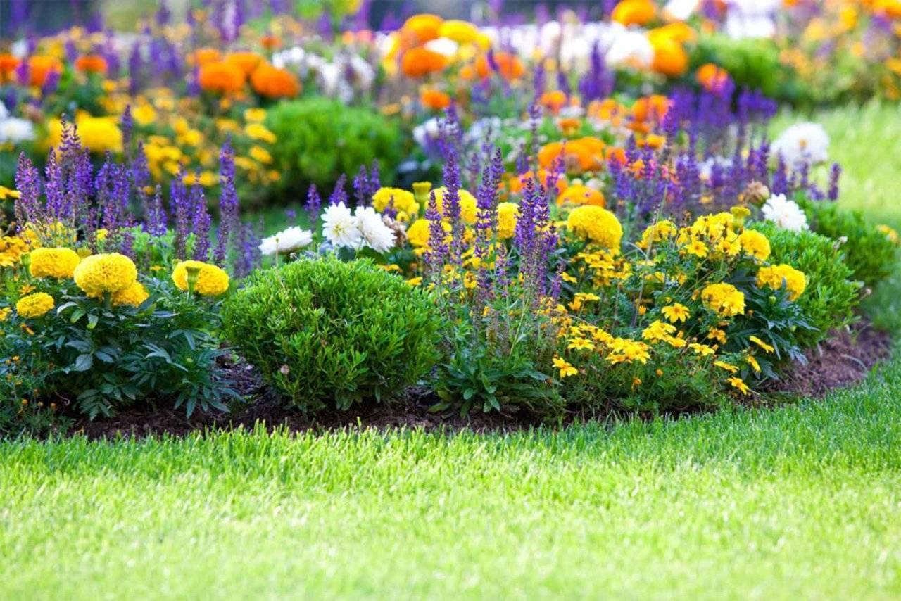 Описание лучших видов многолетних бордюрных цветов, правила оформления