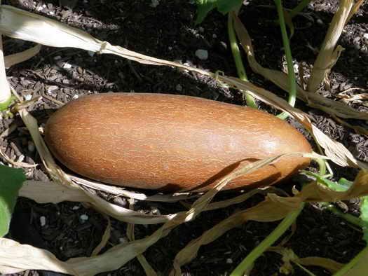 Как замочить семена огурцов перед посадкой — особенности процедуры, советы садоводов как правильно замачивать семена перед высадкой