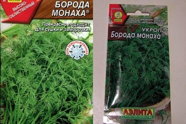 Укроп Борода монаха: описание сорта, выращивание и уход с фото