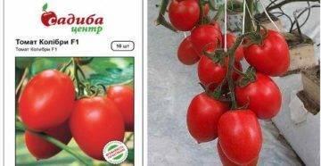Томат турмалин: характеристика и описание сорта, его урожайность с фото