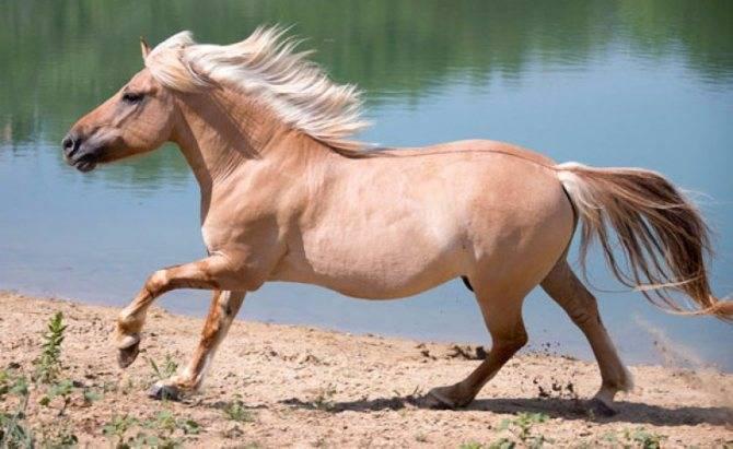 Разнообразие окрасов лошадей: разбираем масти