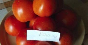 Томат черника — описание сорта, фото, урожайность и отзывы садоводов